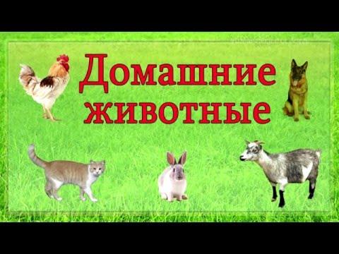 Домашние животные 🐶 Изучаем домашних животных и их голоса. Развивающее видео для детей.