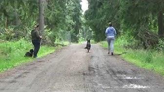 Saksanpaimenkoiran muutos, Koirakoulu Homeetta