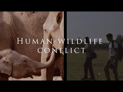 What is Human-Wildlife Conflict?