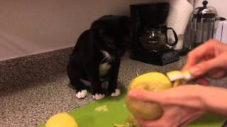 Cat eats raw potatoes and LOVES it!(, 2014-01-13T00:31:18.000Z)