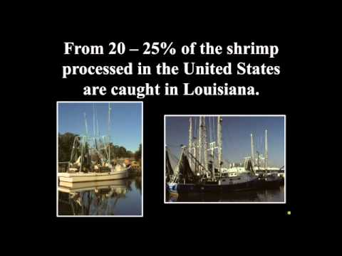 An Overview of Louisiana's Coastal Culture and Economy