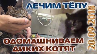 Лечение Тёпы и дикие котята ◆ ВИДЕООТЧЕТ 20/09/18