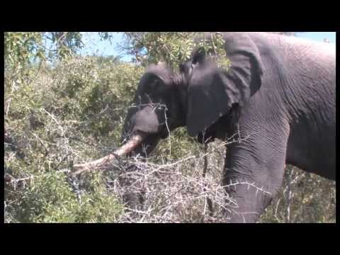 KZN VIDEO FREE STOCK FOOTAGE - South Africa Travel Channel 24 - NO SOUND