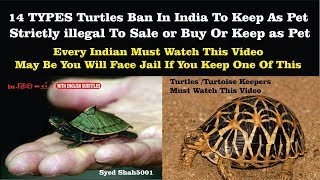 14 types of Turtles Turtoise Ban to keep as pet | you can go to jail if you keep one of these