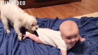 Baby and Dog Funny Fails/Малыш и Собака Смешные Неудачи
