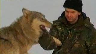 オオカミを飼っているのは、ベラルーシの鳥類学者ドミトリイ・シャモヴ...