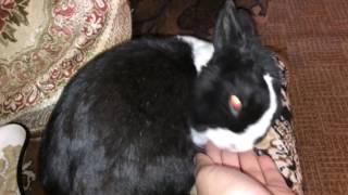 Стоматит у кроликов 🐰. Как лечить?Что делать?