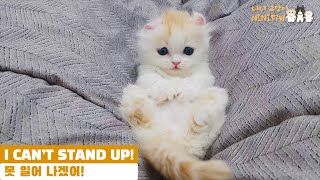 MY BABY KITTEN IS TOO YOUNG TO STAND UP ALONE!