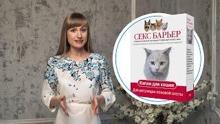 КОШКА ПРОСИТ КОТА: 3 мифа о кошачьей любви и решение проблемы