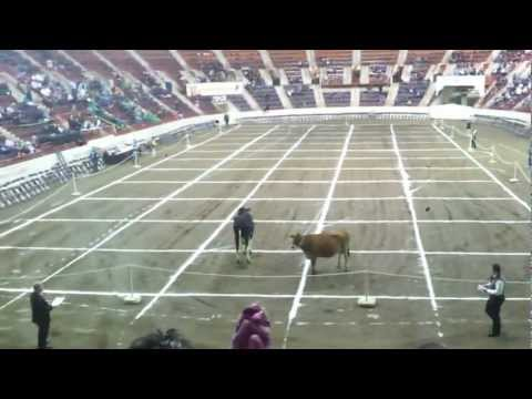Official cow patty bingo