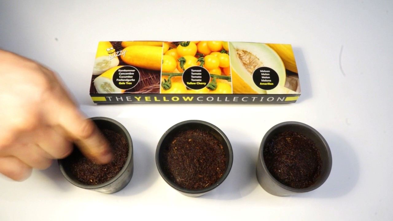 Buzzy Seeds The Yellow Collection Deel1 Youtube