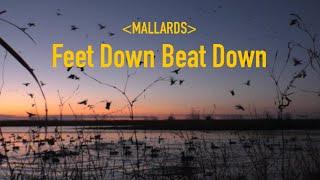 ICE HOLE Mallards Feet Down Beat Down