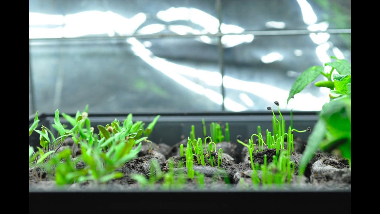 Green Onions Growing Time Lapse - YouTube