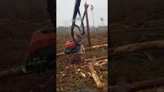 Pozyskanie drewna harwesterem na wiatrołomach 2017