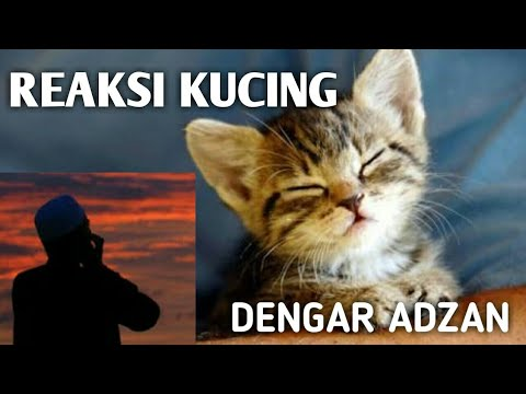Top 5 Kucing Dengar Adzan | 5 Reaction Of Cats When Hearing Azan