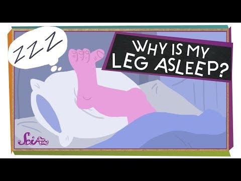 Why Is My Leg Asleep?