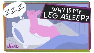 Why Is My Leg Asleep?