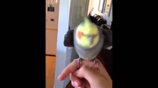 Смешные животные / Попугай поёт дабстеп