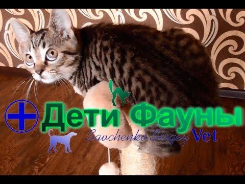 Может ли кошка заразиться если она постоянно сидит дома? Автор ветеринар