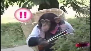 el chimpance y el perro