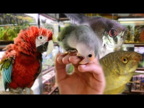 Top 3 AMAZING Pet Stores in Sarajevo | With xtremly Fun Parrots!