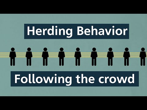 Herding Behavior: How following the crowd leads us astray