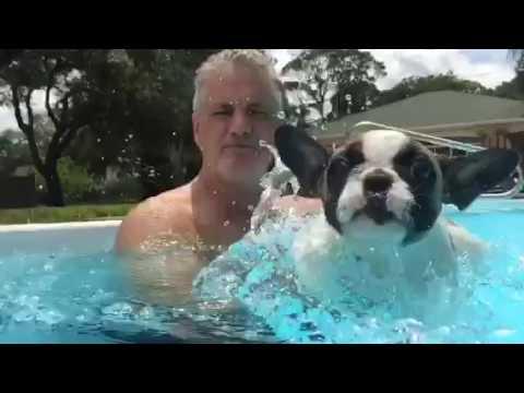French Bulldog Puppy Swimming