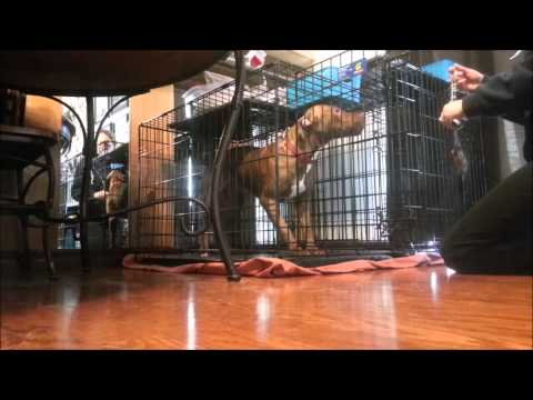 how-to:-calm-a-dog-down-to-let-out-of-crate---take-the-lead-k9-training