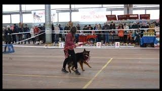 Фристайл с собакой.Ирина Яковлева и ВЕО Лорд.Показательные