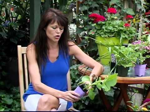 Un jardin en nous, émission 8 - TVRL-E1408