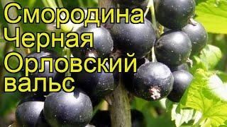 видео Смородина черная Орловская серенада