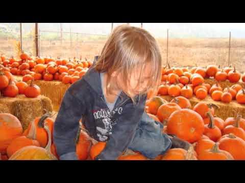 Kai's Halloween field trips with class 2009