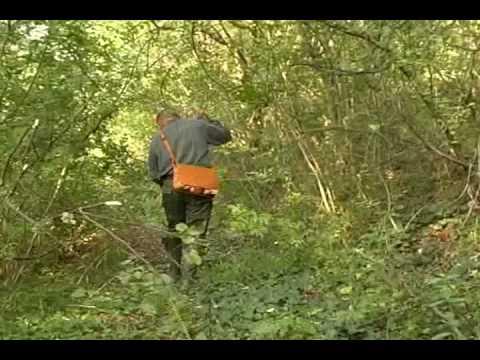 Preparazione caccia beccaccia SETTER INGLESE e astore.