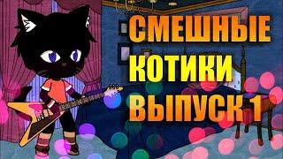 Смешные коты и котики