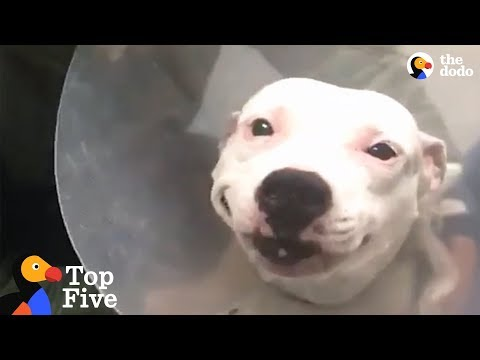 Dog With Broken Legs Finds Family Who Helps Her Heal + Dog Rescue Transformations | The Dodo Top 5