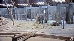 Zoo Wuppertal - Kamera 2