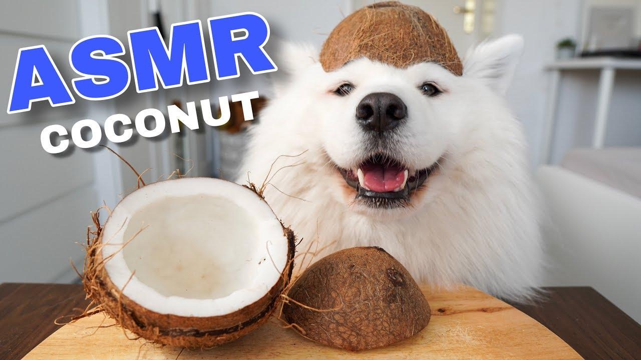 ASMR Dog Eating Crunchy Coconut I MAYASMR