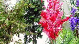 Декоративные кустарники купить декоративные для интерьера квартиры ландшафта сада дачи дома