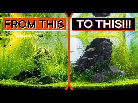 From DISASTER To A TOP 10 Aquascape