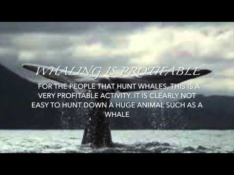 Human Activities Affecting the Biodiversity of Ecosystems ( Whaling )