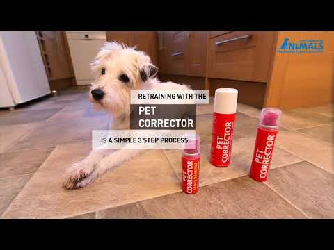 pet-corrector---improving-dog-manners
