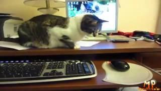 смешные кошки 14