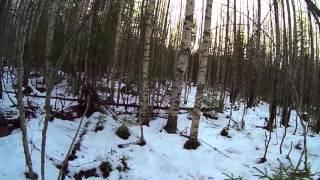 Охота на зайца в Архангельской области(, 2016-01-12T09:02:26.000Z)
