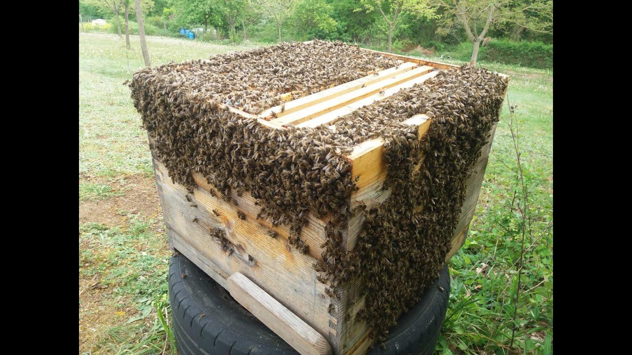 C.A. Yamada: Totul despre albine Care este vederea albinilor