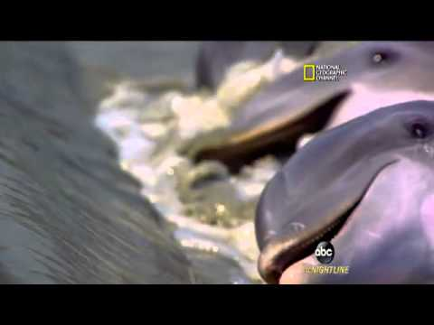 Dolphins Force Fish On Land To Eat Them