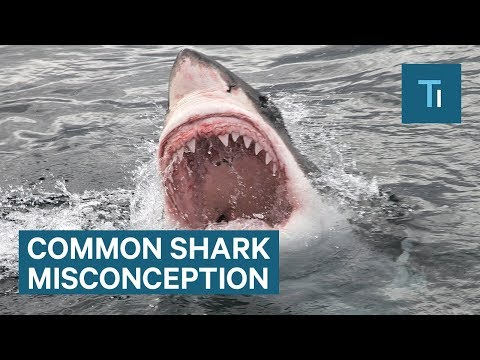 This Is One Of The Biggest Misconceptions About Sharks