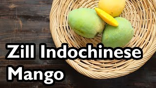 Truly Tropical Mango Varieties- 'Zill Indochinese'