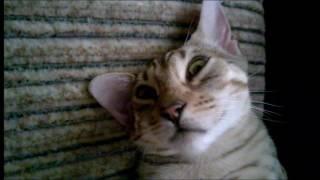Кошка,ты сломалась?  Приколы про кошек, забавное видео ,cat are you broken?funny video