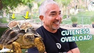 Meet My New Turtles!!!