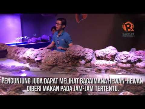 Jakarta Aquarium, wisata alternatif liburan warga Ibukota